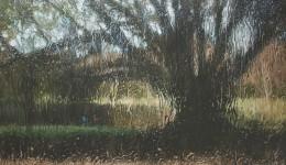 Through the Moreton Bay Fig – Hyde Park